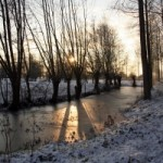 1250209_sun_between_the_trees_in_the_winter