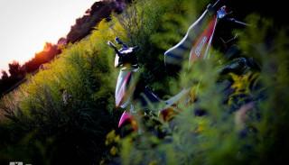 Toros Fresco 50: Zdjęcia i dane techniczne
