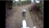 Wściekły baran atakuje motocykl – zobacz wideo