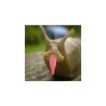 Zdjęcie profilowe milas