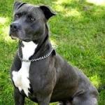 Zdjęcie profilowe Pitbull