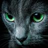 Zdjęcie profilowe Jan Rymsza